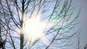 Kevätaurinko paistaa lehdettömän puun takaa