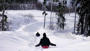 Kaksi nuorta laskee pulkalla alas pitkää alamäkeä metsäaukeamalla.
