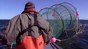 Ammattikalastaja Saaristomerellä
