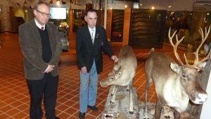 Miehet katsovat peuroja metsästysmuseossa
