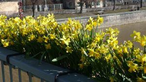 Teatterisillan kukkalaatikot ovat taas kunnossa keskiviikkoyön tihutyön jälkeen.
