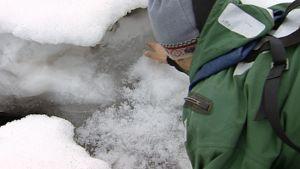 Tutkija tarkastaa norpan talvipesää