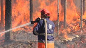 Mies sammuttaa metsäpaloa, kulotusta.