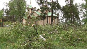 Kaatuneita puita Joensuun Ortodoksisen kirkon pihassa