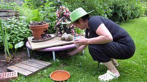 Annukka Hirvijärvi laittaa siilille ruokaa suojaisaan paikkaan