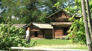Ruskeiksi tummuneita vanhoja hirsisiä rakennuksia Pielisen museon vehreässä pihapiirissä.