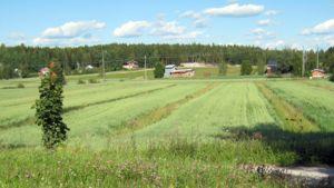 Peltoa ja rakennuksia maaseudulla aurinkoisena kesäpäivänä.