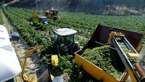 Viininviljelyä Kataloniassa kesällä 2008
