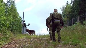 Koirapartio tarkastaa rajaa Pelkolassa