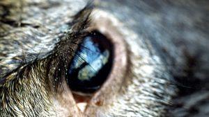 Kuolleen hirven silmä.