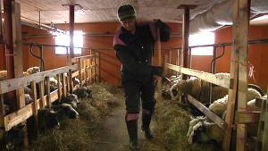 Lammas, lampuri, navetta