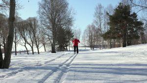 Hiihtäjä hiihtää aurinkoisessa kevätkelissä ladulla