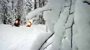 Moottorikelkkoja talvisessa metsässä.