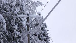 Tykkylunta puissa sähkölinjan vieressä