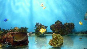 Kaloja akvaariossa