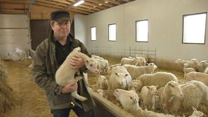 Lammastilallinen Janne Jokela uudessa lampolassa muutaman viikon ikäinen karitsa sylissään.