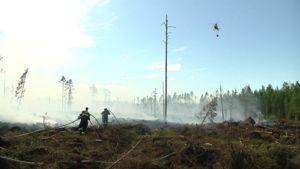 Kuvassa pelastuslaitos ja helikopteri sammuttavat maastopaloa Kokkolan Kälviällä.