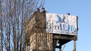 Ihmisiä tarkkailemassa lintuja korkeassa tornissa.
