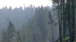 Savua metsää vasten.
