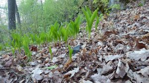 Lehdon karikekerrosta