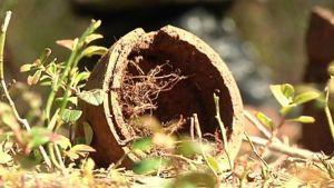 Tämä räjähde löytyi tällä viikolla Pudasjärveltä keskeltä metsää.