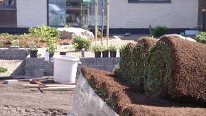 Kuvassa on pihamaa, jossa on istuttamistaan odottavia kasveja ruukuissa.