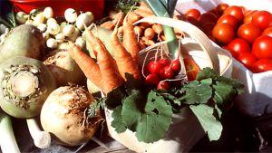 Juureksia ja vihanneksia
