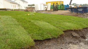 Kuavssa asuntomessualueelle siirrettyä nurmea, jota kastellaan