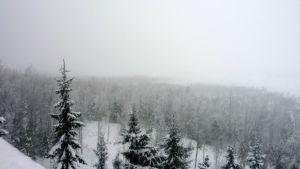 talvinen Torronsuo Tammelassa