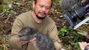 Nisäkästutkija pitelee Uuden-Guinean sademetsästä löytynyttä tieteelle aiemmin tuntematonta 1,4 kiloa painavaa jättiläisrottaa.