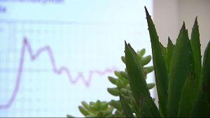 Kaktus ja talouskäyrä.