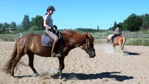 Hevosia ratsastajineen maalaismaisemassa sijaitsevalla hevostallilla