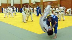 Summer Judo Rocks 2011 -leiriläiset treenaavat monesti päivässä.