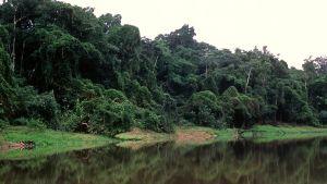 Trooppinen sademetsä