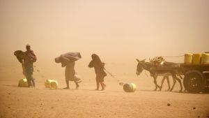 Naiset ja tytöt aasikärryineen hakevat vettä hiekkamyrskyssä Keniassa.