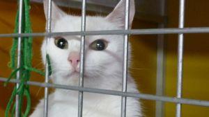 Kissa häkissä löytöeläinsuojassa.