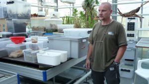Korkeasaaren eläintenhoitaja Timo Paasikunnas esittelee kasvatuslaatikoita.