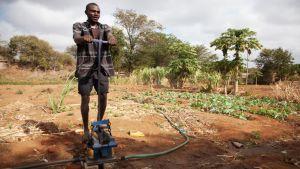 Kenialainen maanviljelijä pumppaa vettä viljelyksilleen käsipumpulla.