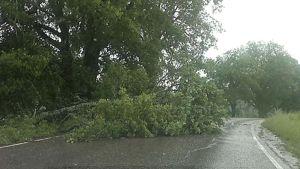 Tielle kaatunut puu.