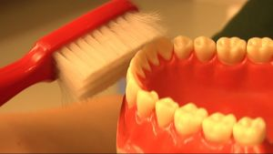 Hampaita harjataan