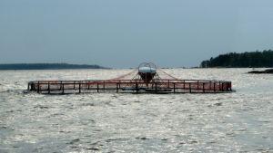 Kalankasvatusallas.