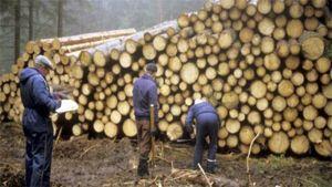 Oikea ajoitus tekee metsänomistajan puukaupoista kannattavia.
