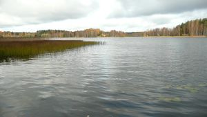 Järven rantaa