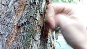 Nyrkki koputtaa puuta.