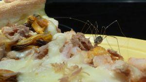 Lukki syömässä frutti di mare -pitsasta tonnikalaa.