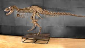 Tyrannosaurus rexin luuranko