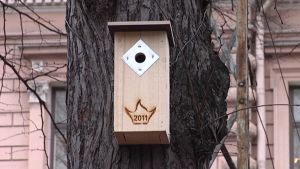 Kulttuuripääkaupunkivuoden logolla varustettu linnunpönttö.
