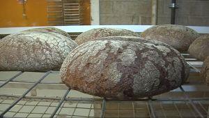 Uunituoreita ruisleipiä leipomossa.