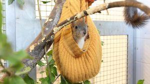 orava pipossa