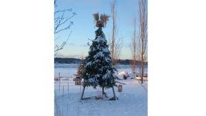 Kuvassa joulukuusi ulkona lumihangessa, latvassa lyhteitä